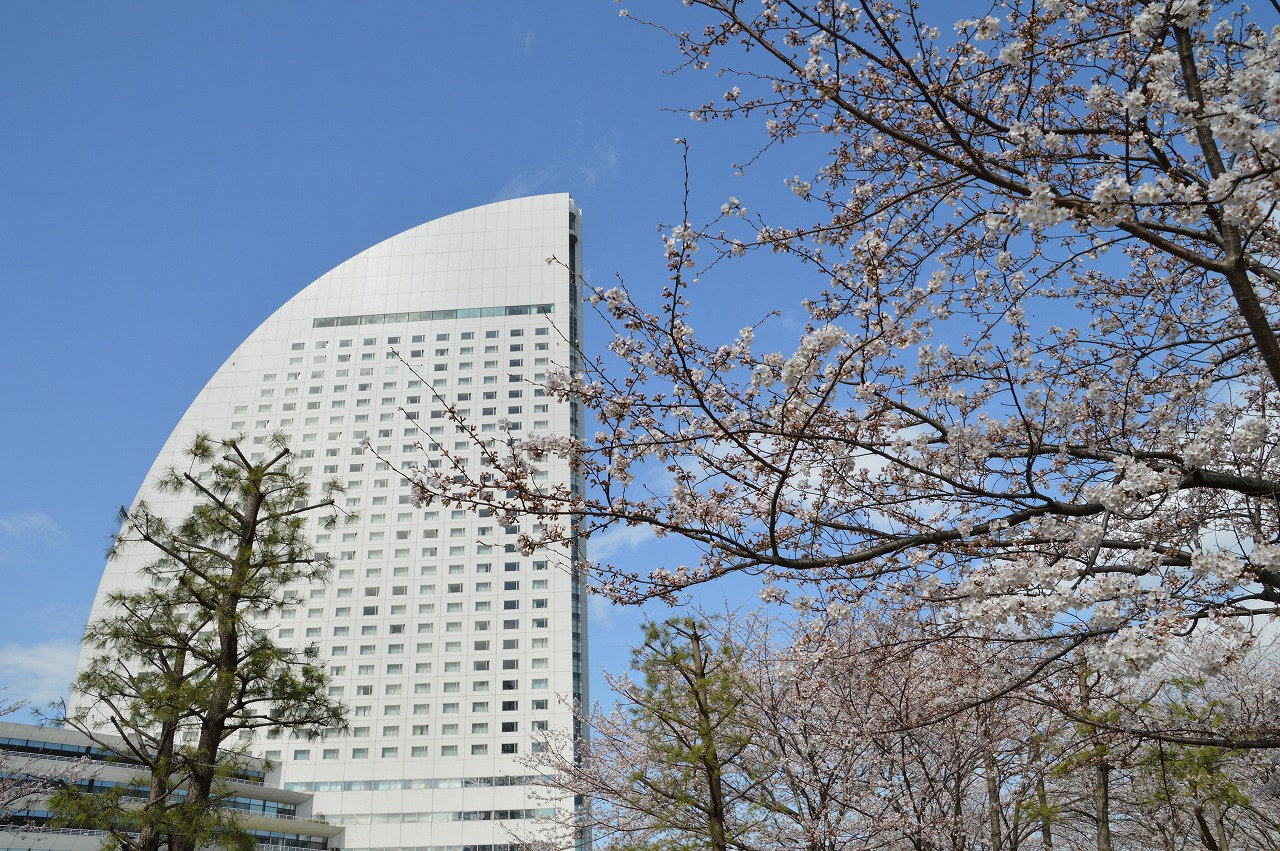 Cherry blossom and InterContinental Yokohama