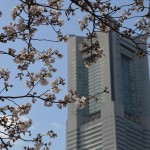 Cherry blossom and Landmark tower